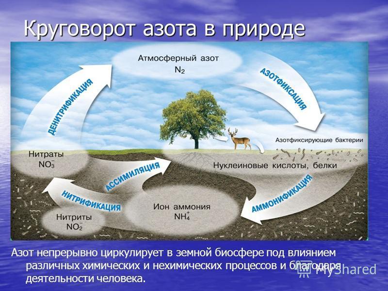 Круговорот азота в природе Азот непрерывно циркулирует в земной биосфере под влиянием различных химических и нехимических процессов и благодаря деятельности человека.