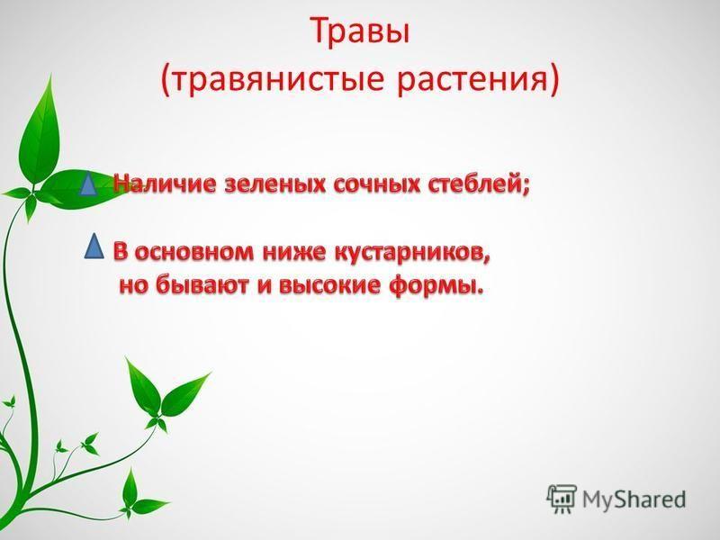 Травы (травянистые растения)