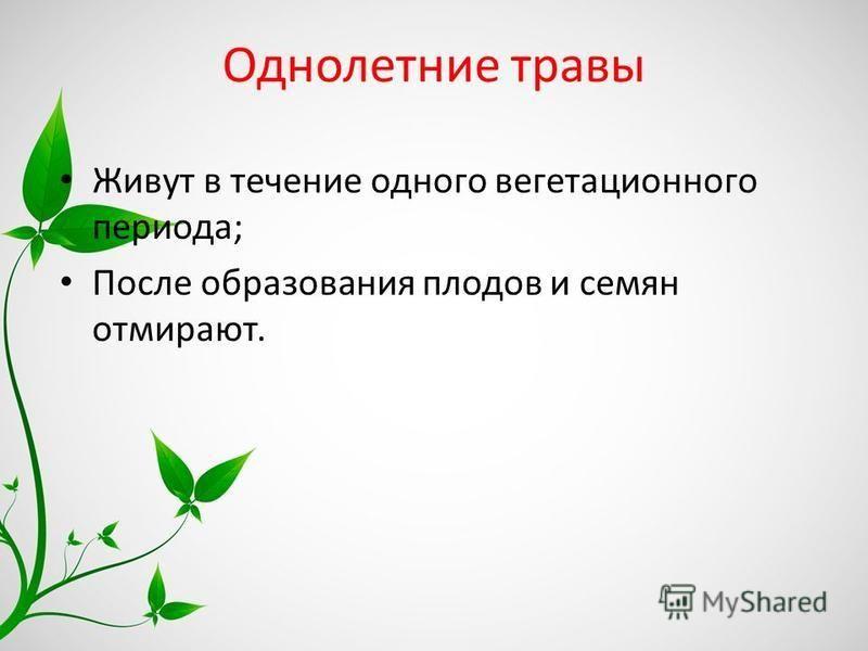Однолетние травы Живут в течение одного вегетационного периода; После образования плодов и семян отмирают.