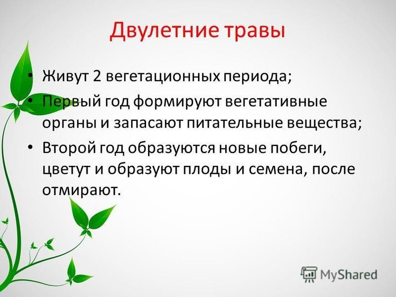 Двулетние травы Живут 2 вегетационных периода; Первый год формируют вегетативные органы и запасают питательные вещества; Второй год образуются новые побеги, цветут и образуют плоды и семена, после отмирают.