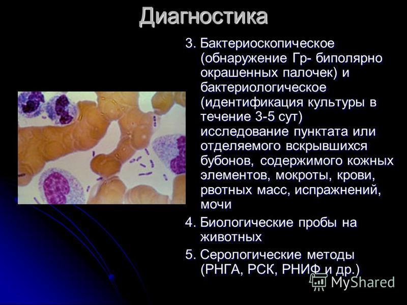 Диагностика 3. Бактериоскопическое (обнаружение Гр- биполярно окрашенных палочек) и бактериологическое (идентификация культуры в течение 3-5 сут) исследование пунктата или отделяемого вскрывшихся бубонов, содержимого кожных элементов, мокроты, крови,