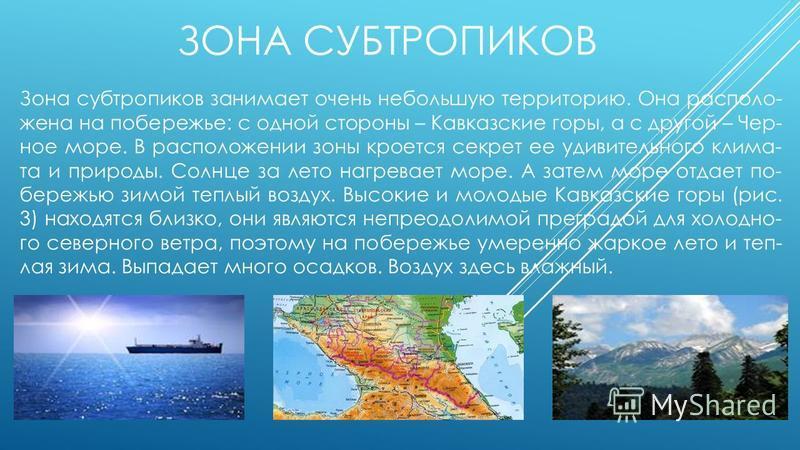 ЗОНА СУБТРОПИКОВ Зона субтропиков занимает очень небольшую территорию. Она располо жена на побережье: с одной стороны – Кавказские горы, а с другой – Чер ное море. В расположении зоны кроется секрет ее удивительного