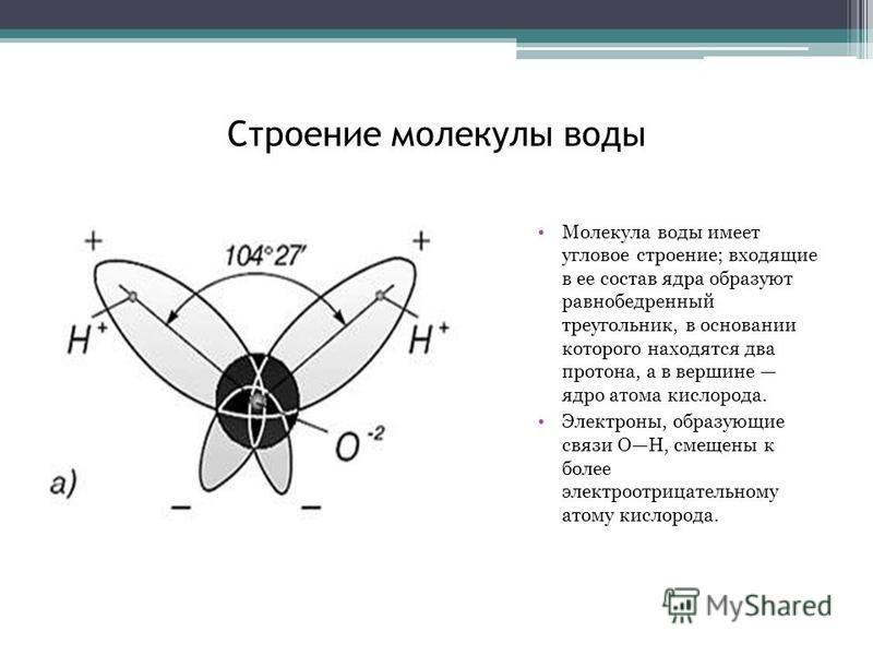 Строение молекулы воды Молекула воды имеет угловое строение; входящие в ее состав ядра образуют равнобедренный треугольник, в основании которого находятся два протона, а в вершине ядро атома кислорода. Электроны, образующие связи ОН, смещены к более