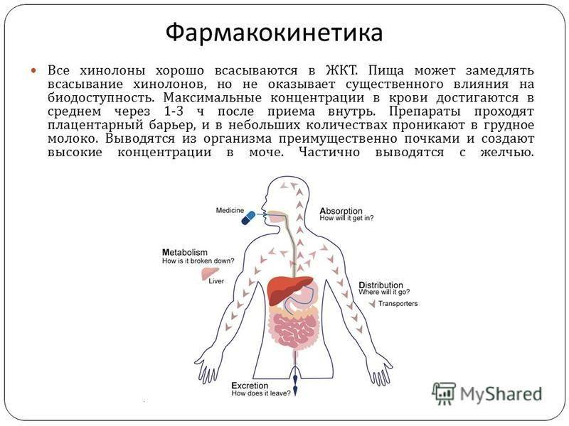 Фармакокинетика Все хинолоны хорошо всасываются в ЖКТ. Пища может замедлять всасывание хинолонов, но не оказывает существенного влияния на биодоступность. Максимальные концентрации в крови достигаются в среднем через 1-3 ч после приема внутрь. Препар