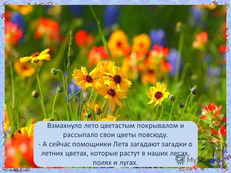Взмахнуло лето цветастым покрывалом и рассыпало свои цветы повсюду. - А сейчас помощники Лета загадают загадки о летних цветах, которые растут в наших лесах, полях и лугах.