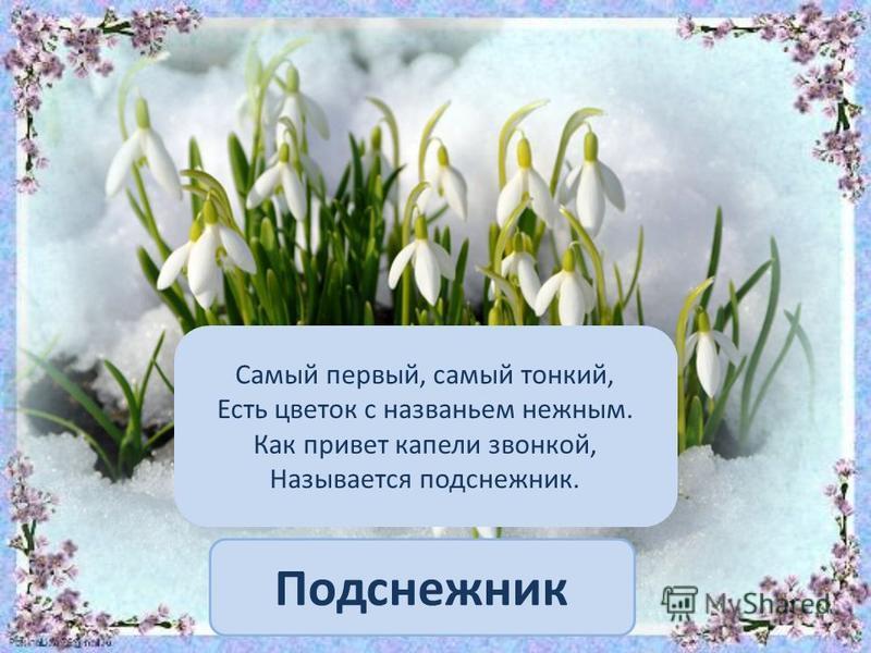 Подснежник Самый первый, самый тонкий, Есть цветок с названьем нежным. Как привет капели звонкой, Называется подснежник.
