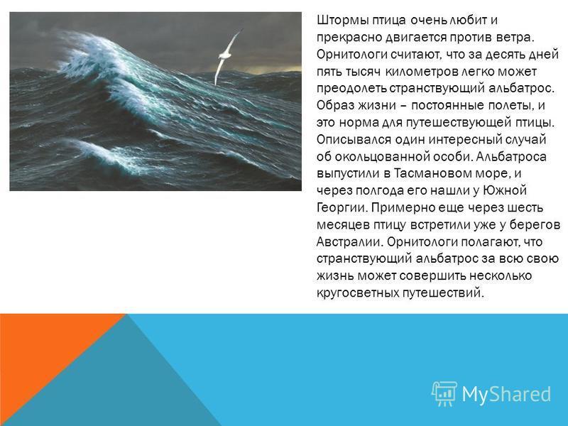 Штормы птица очень любит и прекрасно двигается против ветра. Орнитологи считают, что за десять дней пять тысяч километров легко может преодолеть странствующий альбатрос. Образ жизни – постоянные полеты, и это норма для путешествующей птицы. Описывалс