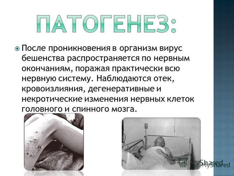 П АТОГЕНЕЗ