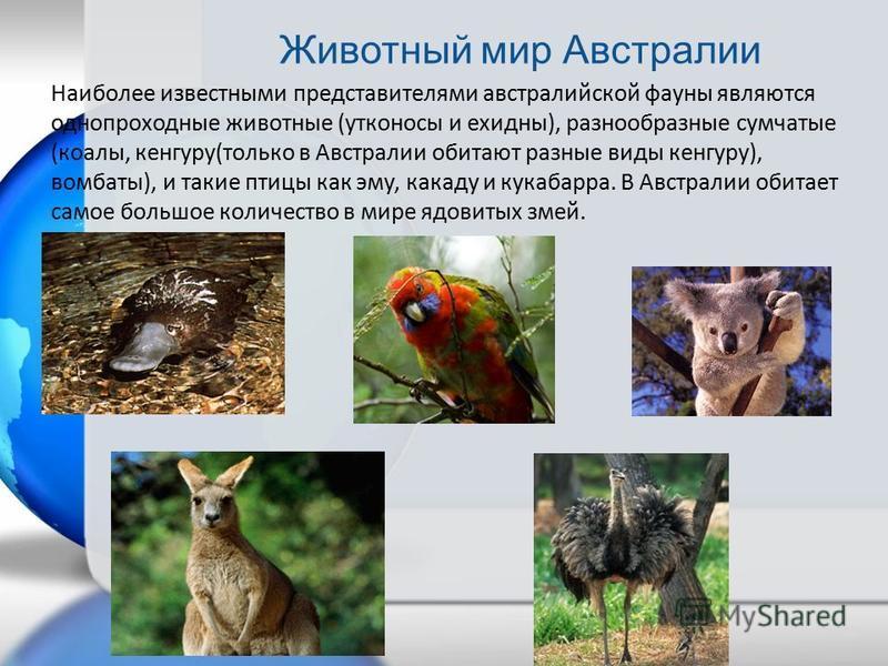 Наиболее известными представителями австралийской фауны являются однопроходные животные (утконосы и ехидны), разнообразные сумчатые (коалы, кенгуру(только в Австралии обитают разные виды кенгуру), вомбаты), и такие птицы как эму, какаду и кукабарра.