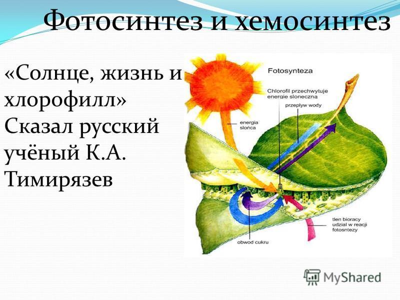 Фотосинтез и хемосинтез «Солнце, жизнь и хлорофиллл» Сказал русский учёный К.А. Тимирязев