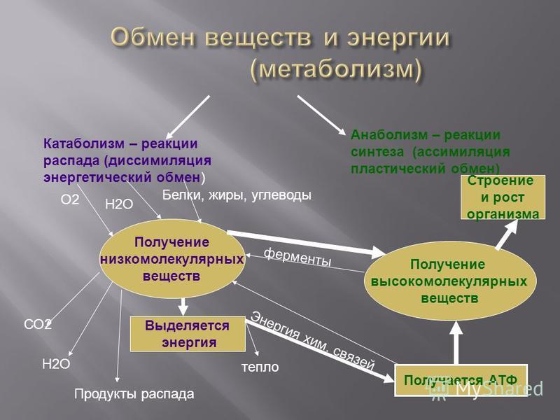 Катаболизм – реакции распада (диссимиляция энергетический обмен) Анаболизм – реакции синтеза (ассимиляция пластический обмен) Получение низкомолекулярных веществ Получение высокомолекулярных веществ Выделяется энергия Получается АТФ Строение и рост о