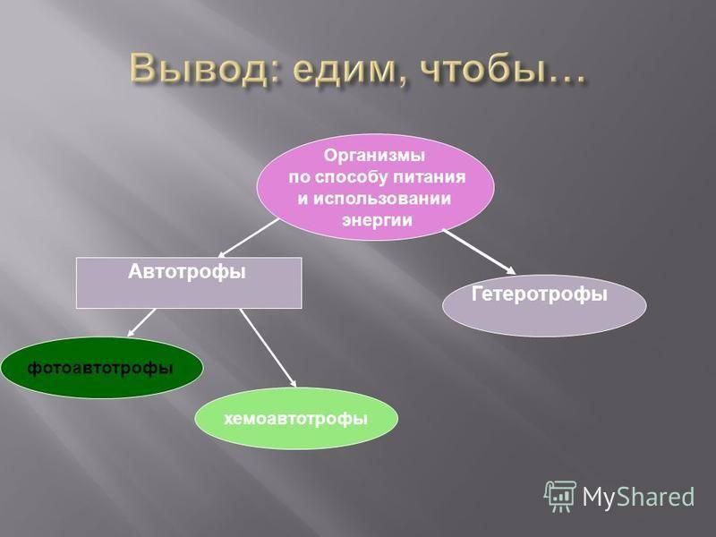 Организмы по способу питания и использовании энергии хемоавтотрофы Гетеротрофы Автотрофы фотоавтотрофы