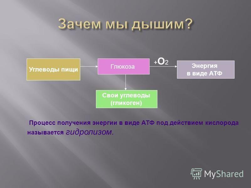 Углеводы пищи Глюкоза Свои углеводы (гликоген) Энергия в виде АТФ Процесс получения энергии в виде АТФ под действием кислорода называется гидролизом. +О2+О2