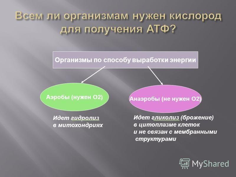 Организмы по способу выработки энергии Аэробы (нужен О2) Анаэробы (не нужен О2) Идет гидролиз в митохондриях Идет гликолиз (брожение) в цитоплазме клеток и не связан с мембранными структурами