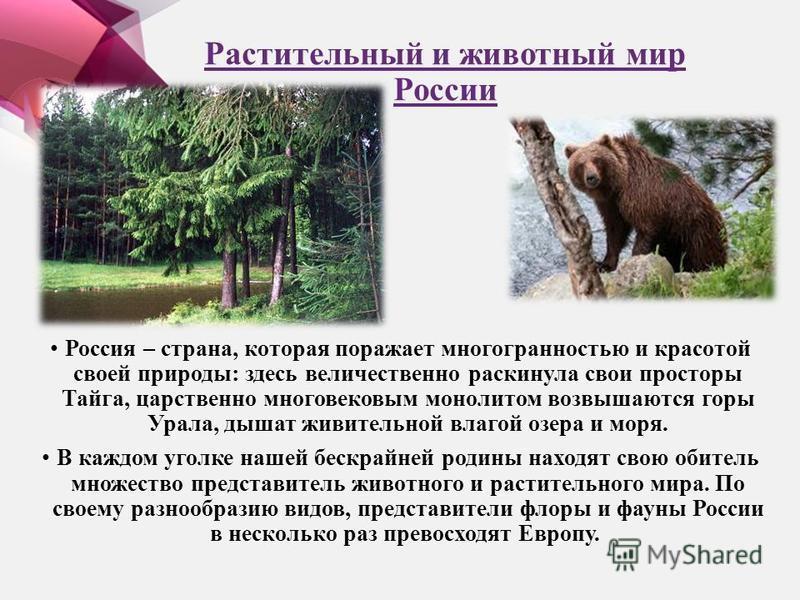 Растительный и животный мир России Россия – страна, которая поражает многогранностью и красотой своей природы: здесь величественно раскинула свои просторы Тайга, царственно многовековым монолитом возвышаются горы Урала, дышат живительной влагой озера