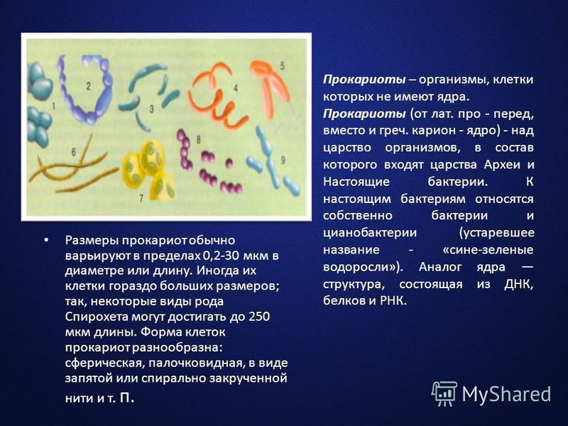 Прокариоты – организмы, клетки которых не имеют ядра. Прокариоты (от лат. про - перед, вместо и греч. карион - ядро) - над царство организмов, в состав которого входят царства Археи и Настоящие бактерии. К настоящим бактериям относятся собственно бак