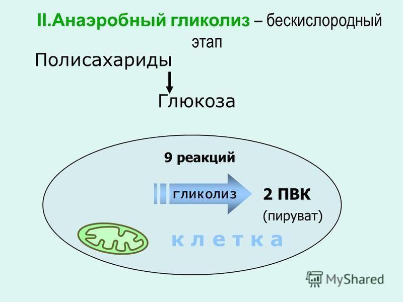 Глюкоза Полисахариды 2 ПВК II.Анаэробный гликолиз – бескислородный этап к л е т к а 9 реакций (пируват) гликолиз