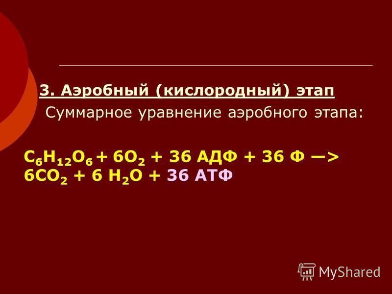 3. Аэробный (кислородный) этап Суммарное уравнение аэробного этапа: С 6 Н 12 О 6 + 6О 2 + 36 АДФ + 36 Ф > 6СО 2 + 6 Н 2 О + 36 АТФ