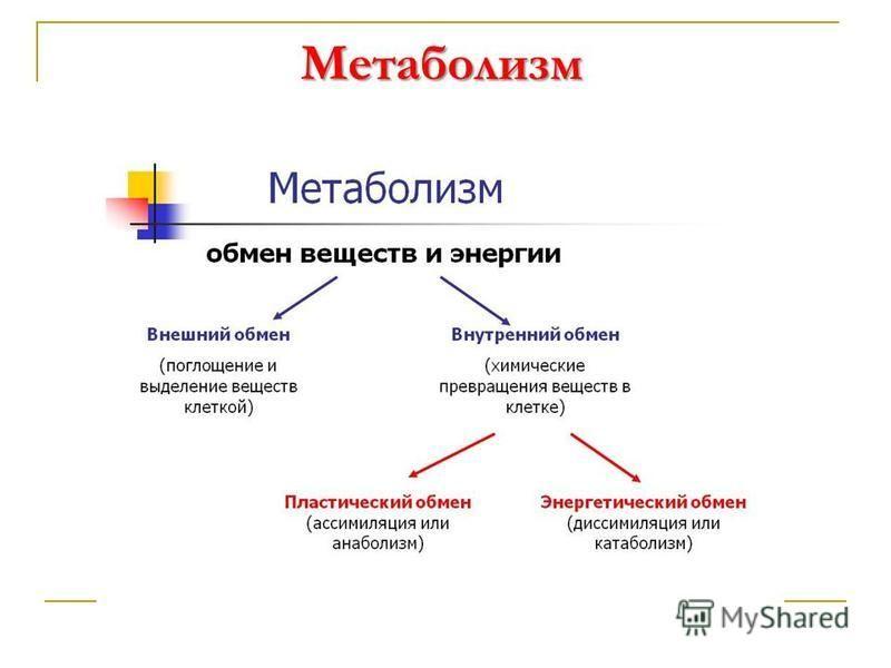Метаболизм Метаболизм