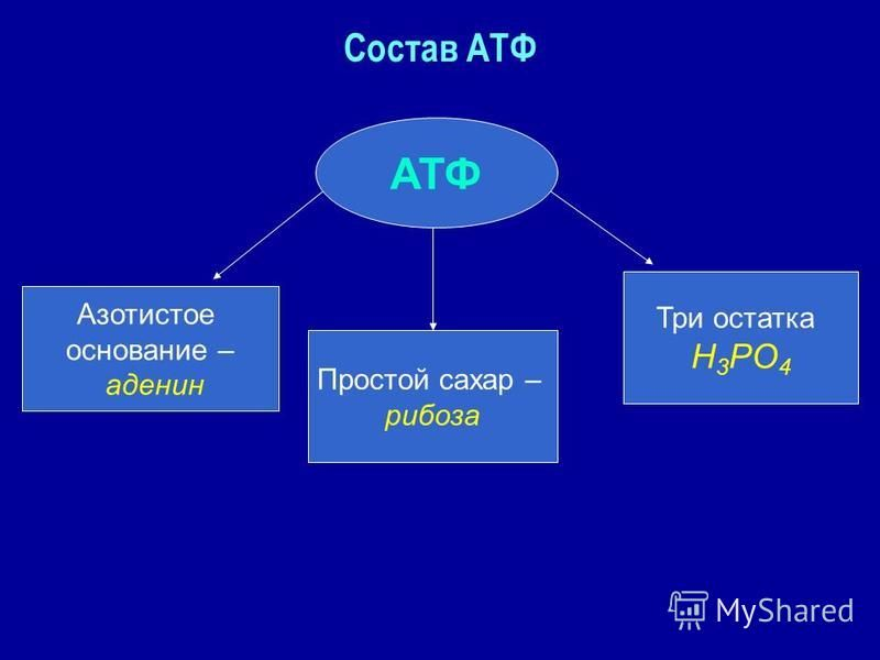 Состав АТФ АТФ Азотистое основание – аденин Простой сахар – рибоза Три остатка Н 3 РО 4