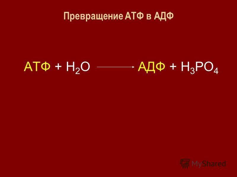Превращение АТФ в АДФ АТФ + Н 2 О АДФ + Н 3 РО 4