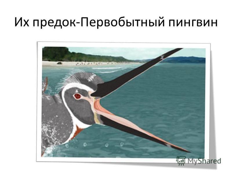Их предок-Первобытный пингвин