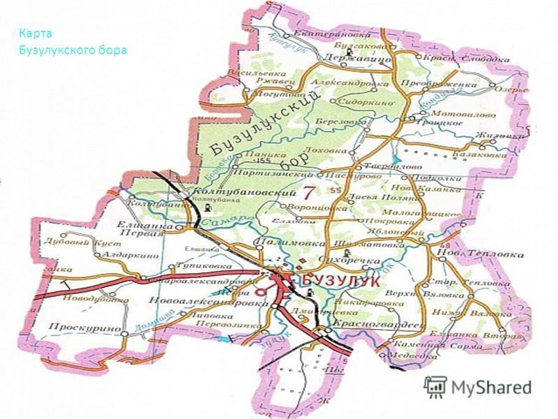 Карта Бузулукского бора