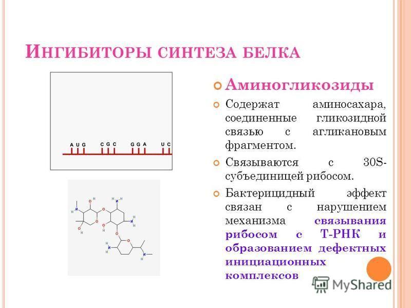 И НГИБИТОРЫ СИНТЕЗА БЕЛКА Аминогликозиды Содержат аминосахара, соединенные гликозидной связью с агликановым фрагментом. Связываются с 30S- субъединицей рибосом. Бактерицидный эффект связан с нарушением механизма связывания рибосом с Т-РНК и образован