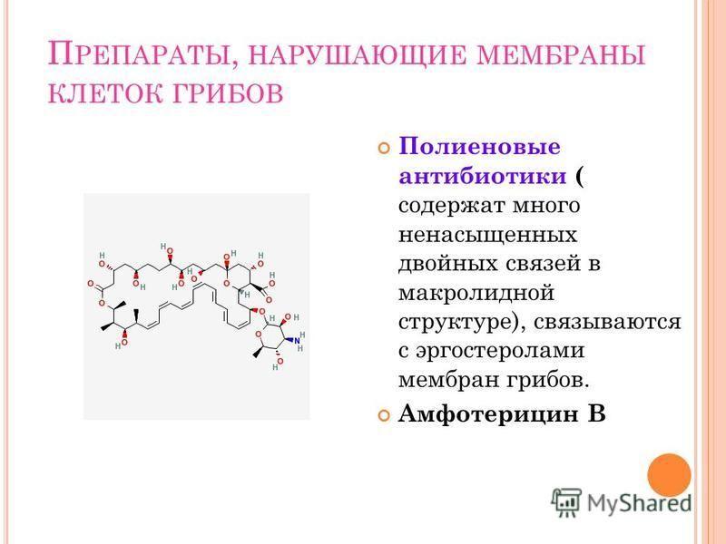 П РЕПАРАТЫ, НАРУШАЮЩИЕ МЕМБРАНЫ КЛЕТОК ГРИБОВ Полиеновые антибиотики ( содержат много ненасыщенных двойных связей в макролидной структуре), связываются с эргостеролами мембран грибов. Амфотерицин В