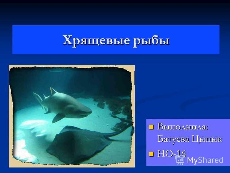 Хрящевые рыбы Выполнила: Батуева Цыцык Выполнила: Батуева Цыцык НО-16 НО-16