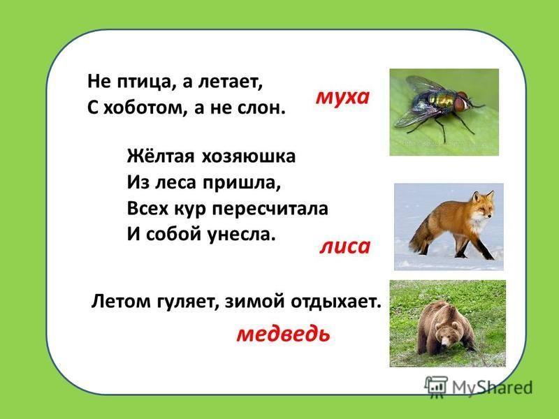 Не птица, а летает, С хоботом, а не слон. Жёлтая хозяюшка Из леса пришла, Всех кур пересчитала И собой унесла. Летом гуляет, зимой отдыхает. муха лиса медведь