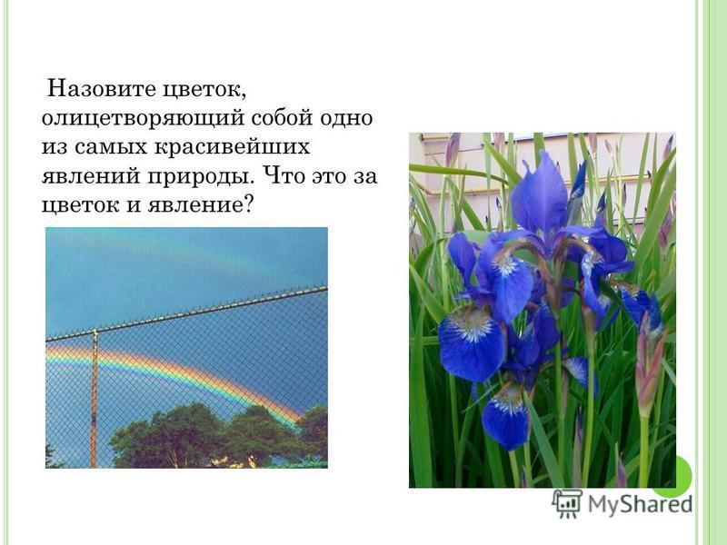 Назовите цветок, олицетворяющий собой одно из самых красивейших явлений природы. Что это за цветок и явление?