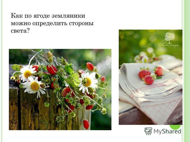 Как по ягоде земляники можно определить стороны света?