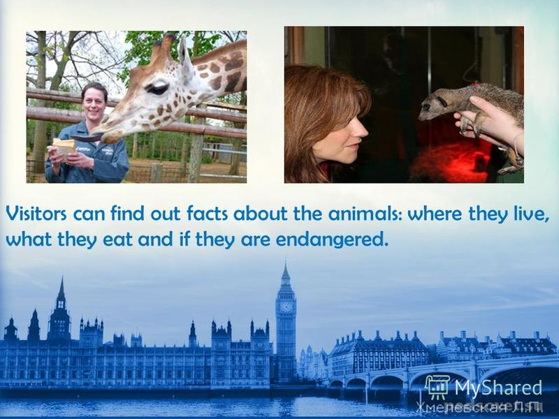 Visitors can find out facts about the animals: where they live, what they eat and if they are endangered.