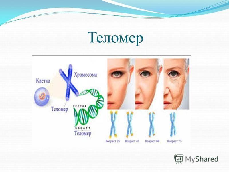 Теломер