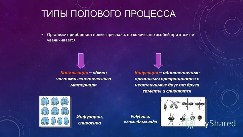 ТИПЫ ПОЛОВОГО ПРОЦЕССА Организм приобретает новые признаки, но количество особей при этом не увеличивается Конъюгация – обмен частями генетического материала Копуляция – одноклеточные организмы превращаются в неотличимые друг от друга гаметы и сливаю