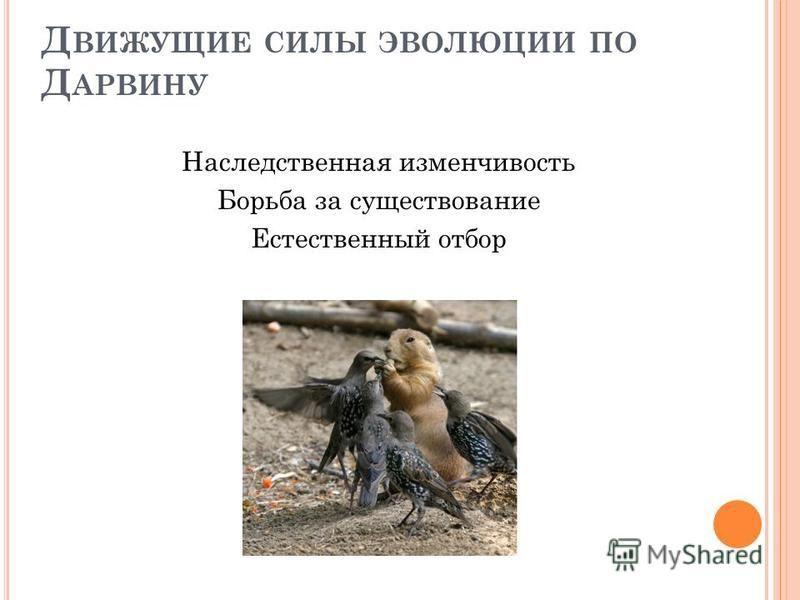 Д ВИЖУЩИЕ СИЛЫ ЭВОЛЮЦИИ ПО Д АРВИНУ Наследственная изменчивость Борьба за существование Естественный отбор