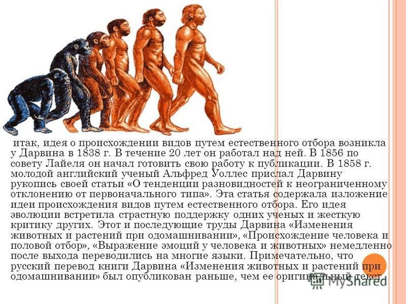 итак, идея о происхождении видов путем естественного отбора возникла у Дарвина в 1838 г. В течение 20 лет он работал над ней. В 1856 по совету Лайеля он начал готовить свою работу к публикации. В 1858 г. молодой английский ученый Альфред Уоллес присл