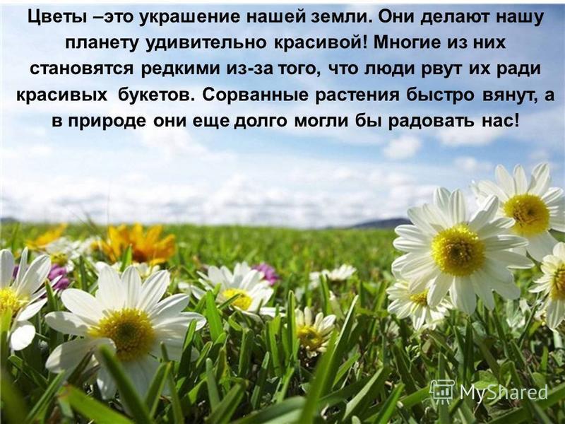 Цветы –это украшение нашей земли. Они делают нашу планету удивительно красивой! Многие из них становятся редкими из-за того, что люди рвут их ради красивых букетов. Сорванные растения быстро вянут, а в природе они еще долго могли бы радовать нас!