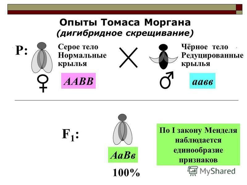 P:P: Опыты Томаса Моргана (дигибридное скрещивание) Серое тело Нормальные крылья Чёрное тело Редуцированные крылья ААВВпав F1:F1: 100% Аа Вв По I закону Менделя наблюдается единообразие признаков