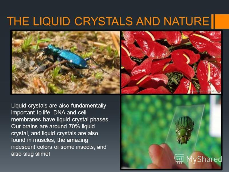 THE LIQUID CRYSTALS AND NATURE Liquid crystals are also fundamentally important to life. DNA and cell membranes have liquid crystal phases. Our brains are around 70% liquid crystal, and liquid crystals are also found in muscles, the amazing iridescen
