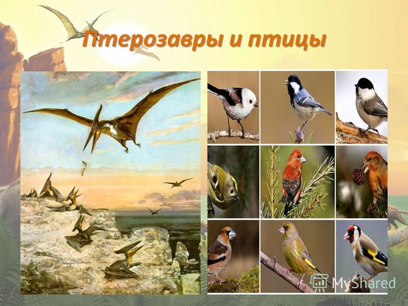 Птерозавры и птицы