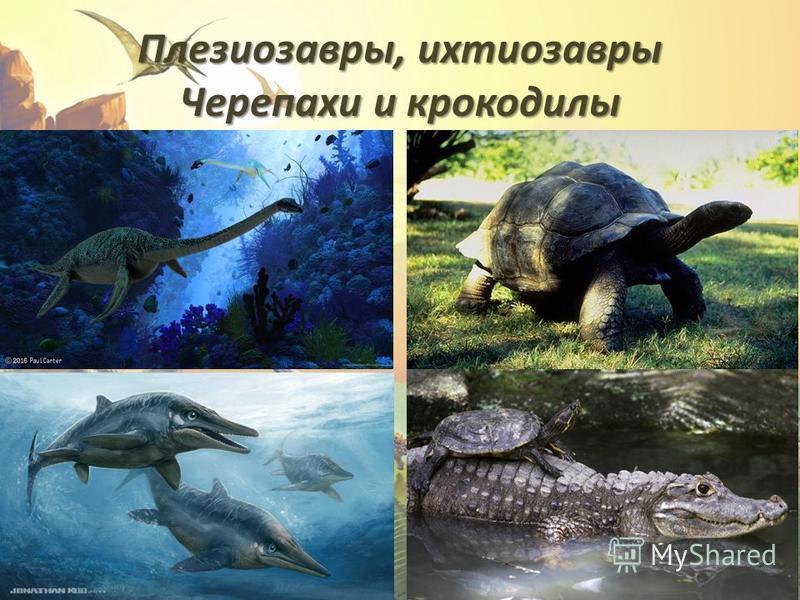 Плезиозавры, ихтиозавры Черепахи и крокодилы