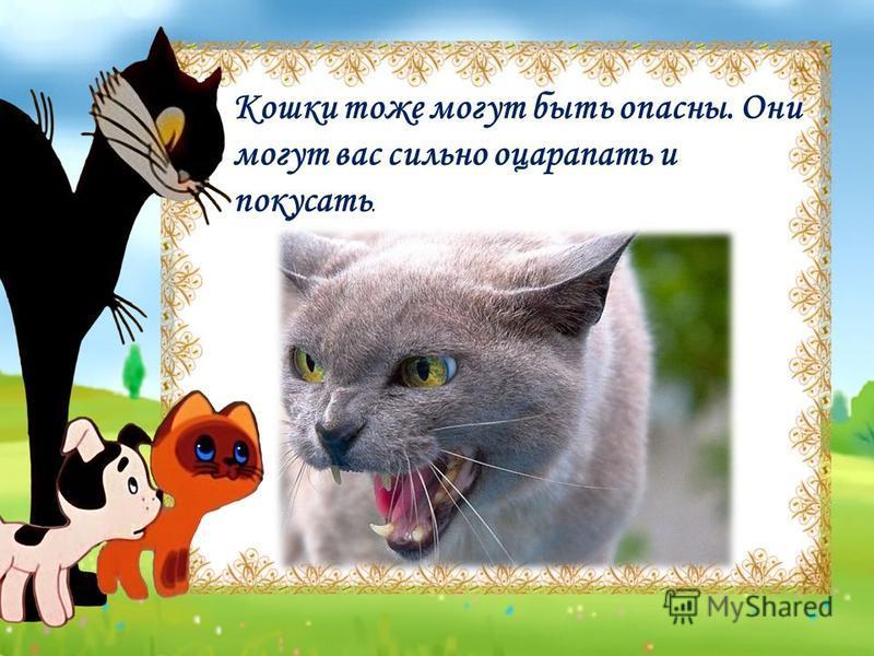 Кошки тоже могут быть опасны. Они могут вас сильно оцарапать и покусать.