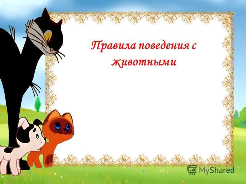 Правила поведения с животными