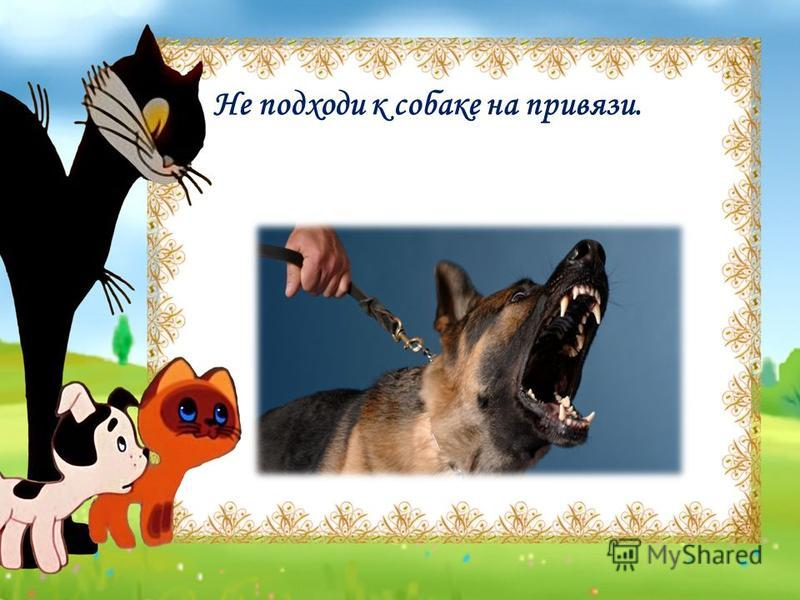 Не подходи к собаке на привязи.