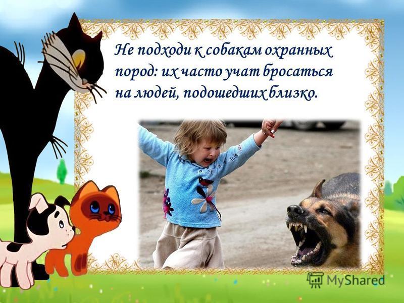 Не подходи к собакам охранных пород: их часто учат бросаться на людей, подошедших близко.