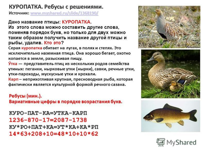 КУРОПАТКА. Ребусы с решениями. Источник: www.myshared.ru/slide/1368190/ www.myshared.ru/slide/1368190/ Ребусы (мин.). Вариативные цифры в порядке возрастания букв. КУРО-ПАТ-КА=УТКА-КАРП1236-870-17=2087-1738КУ*РО+ПАТ+КА=УТ*КА+КА*РП14*63+208+10=48*10+1