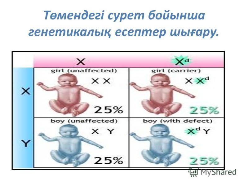 Төмендегі сурет бойынша генетикалық есептер шығару.