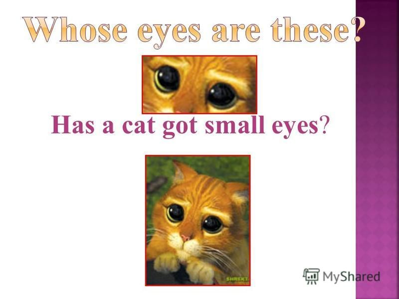 Has a cat got small eyes?